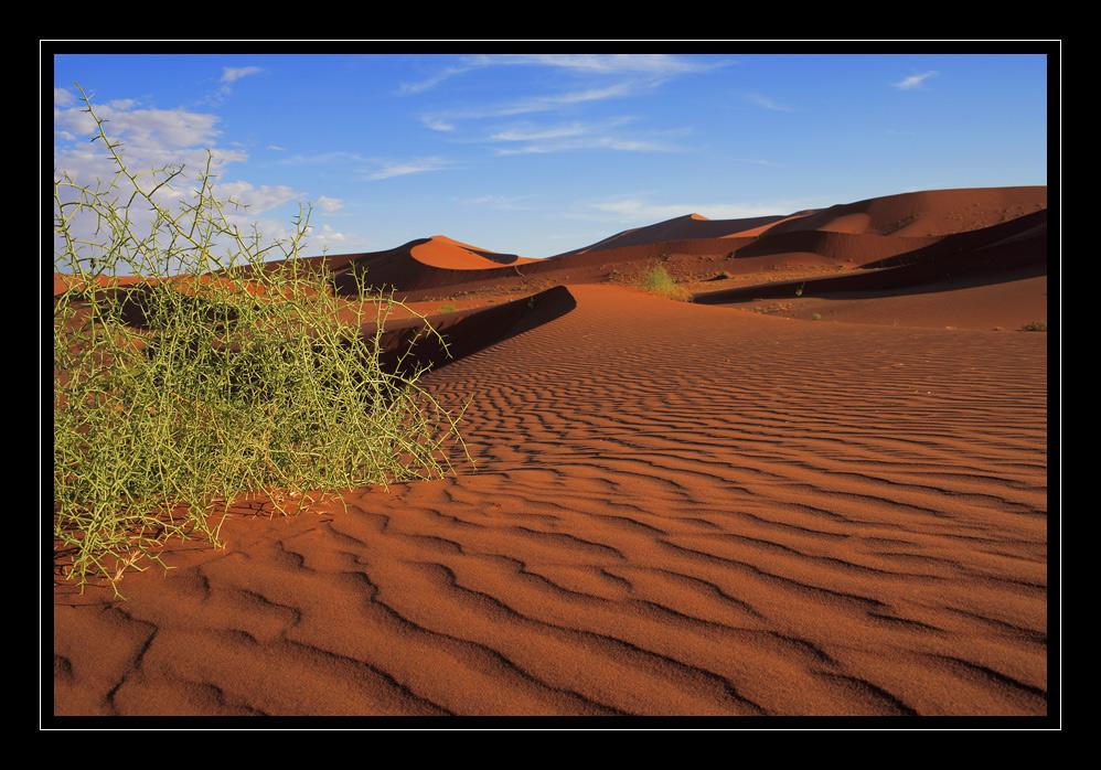Namibia / Sossusvlei #18