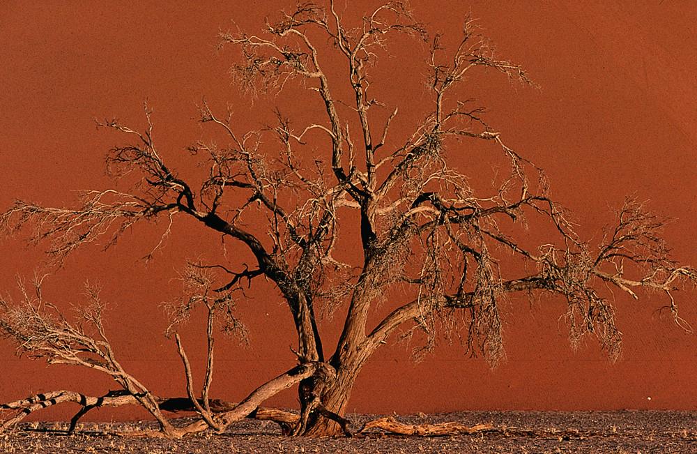 NAMIBIA Sossusvlei Düne 45