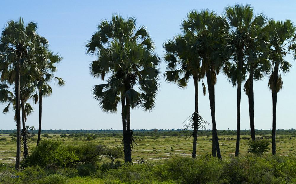 Namibia - Twee Palms in der Etosha Pan