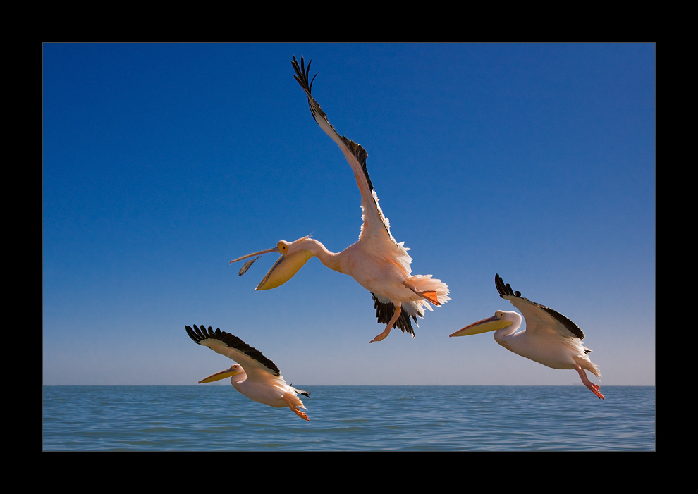 Namibia VI - Fische fangen