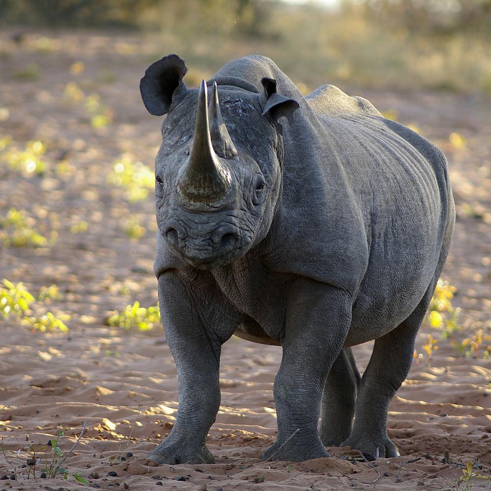 NAMIBIA Waterberg Plateau 1
