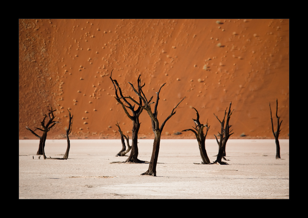Namibia XII - dead trees