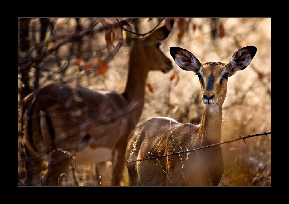Namibia XLIII - Versteckt im Busch