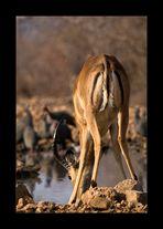 Namibia XXXIX - Mc Donalds of the bush