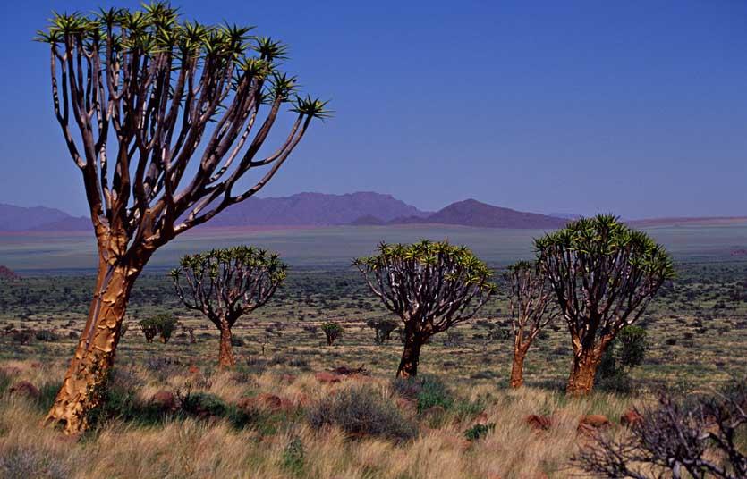 NamibRand Nature Reserve 25