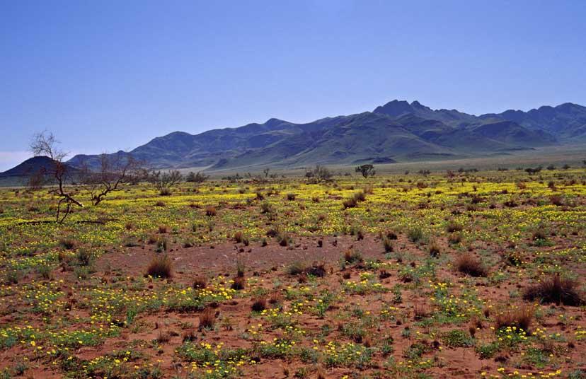 NamibRand Nature Reserve 28