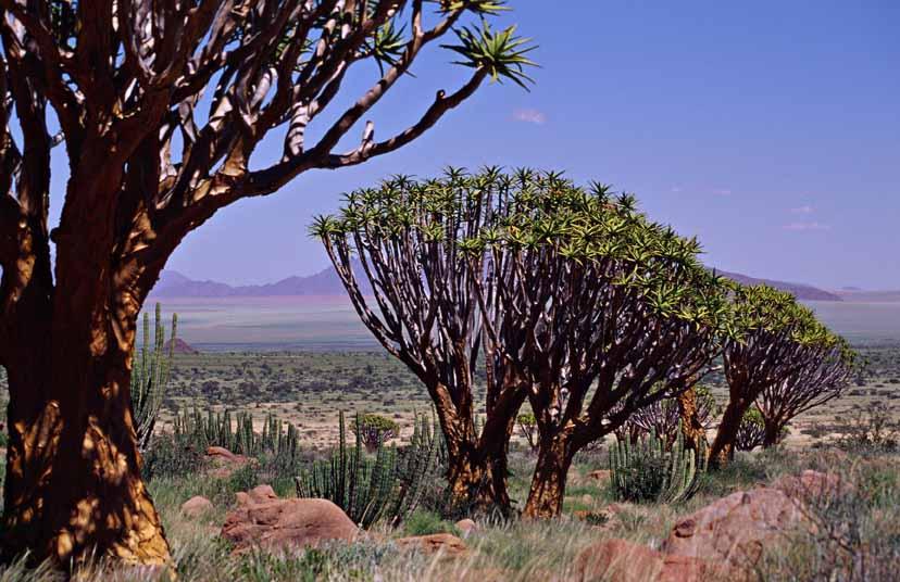 NamibRand Nature Reserve 8