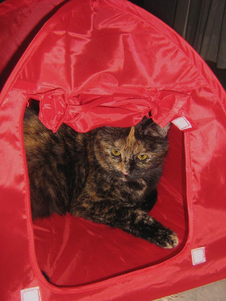 Nana im Zelt