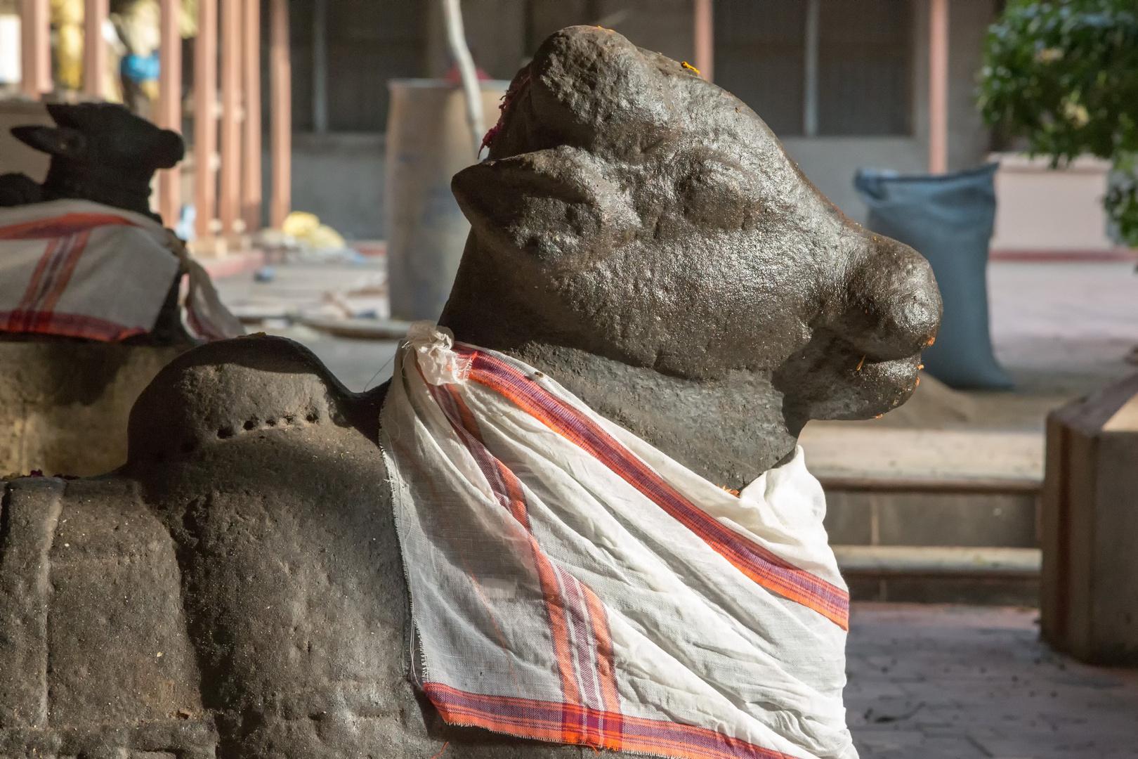 """Nandi dans la cour du musée """"Art gallery"""", Tanjore"""