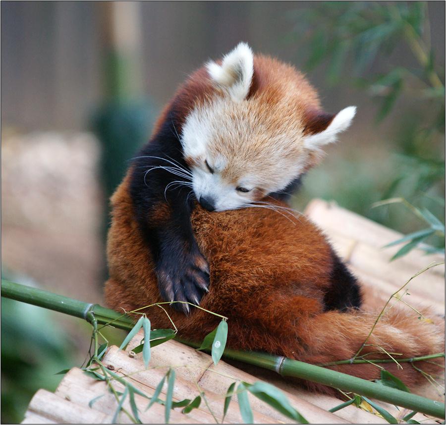 Nap of bamboo