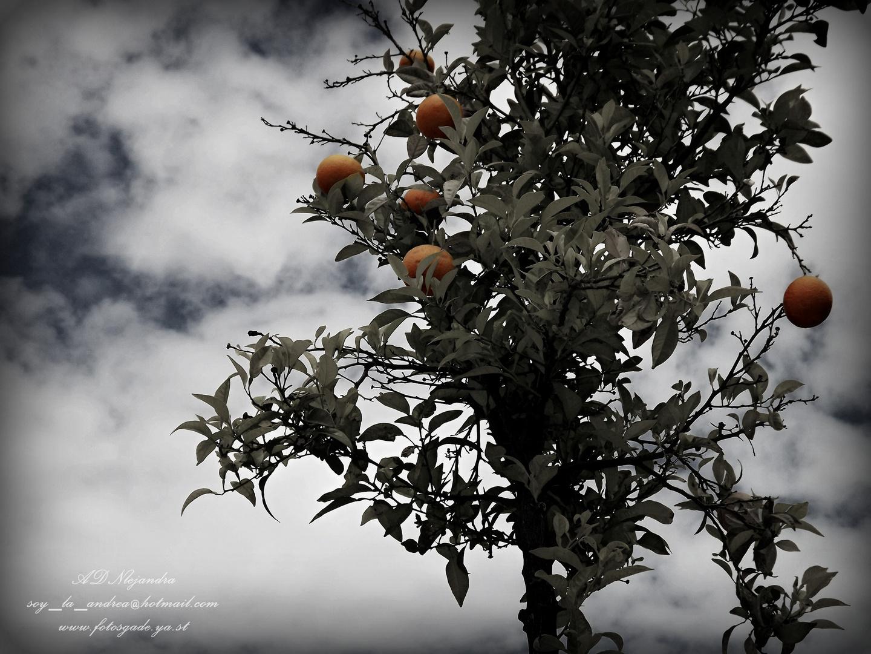 Naranjas de Jerez