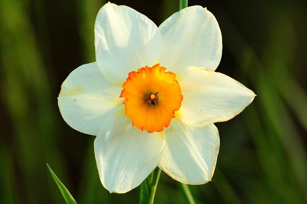 Narciso Spring 2009_01
