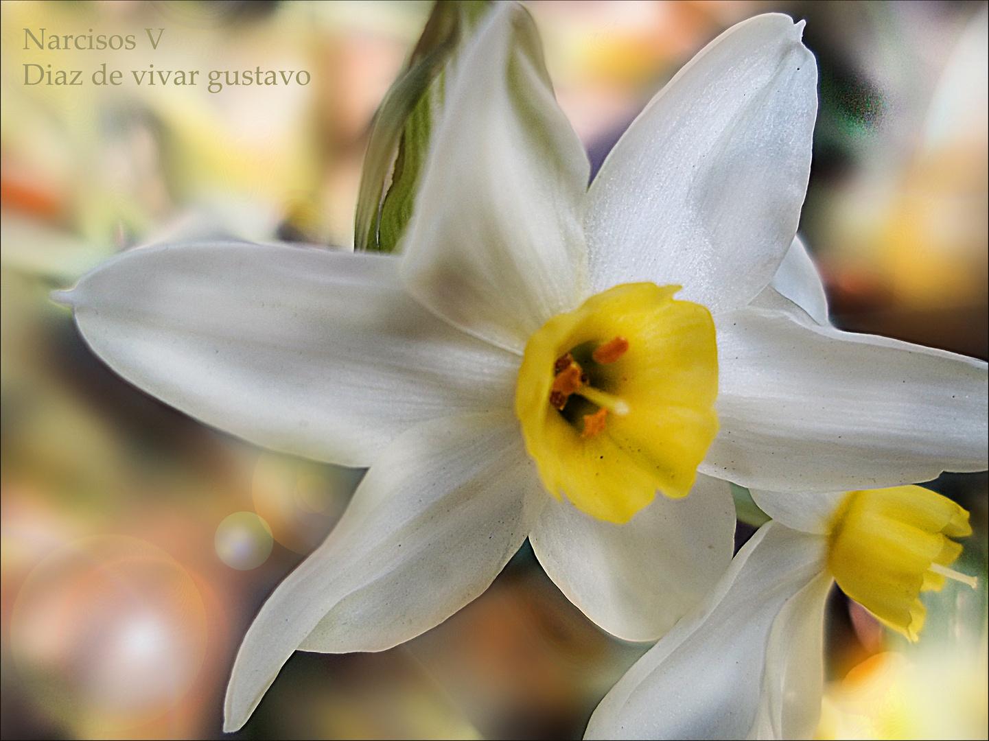 Narcisos V - Diaz de vivar gustavo