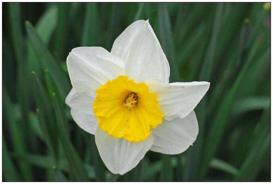Narcisse (2)
