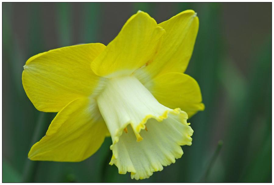 Narcisse (3)