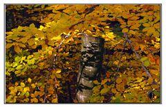narcissisme des feuilles d automne...