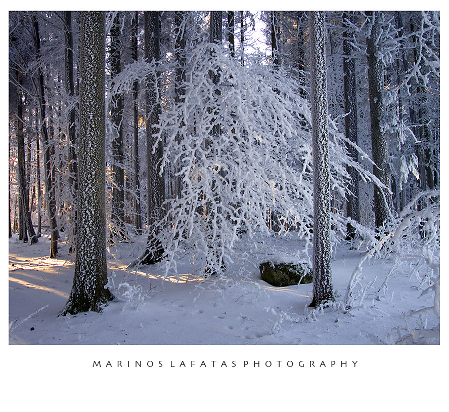 narnia forest