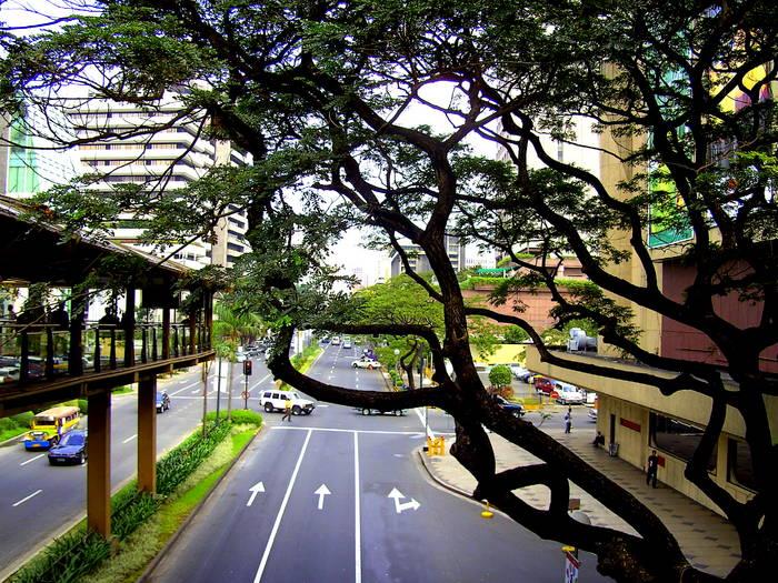 Narra Tree; Makati