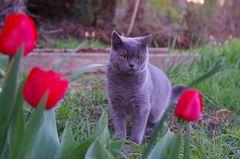 Narzissus und die Tulipan, die ziehen sich viel schöner an...