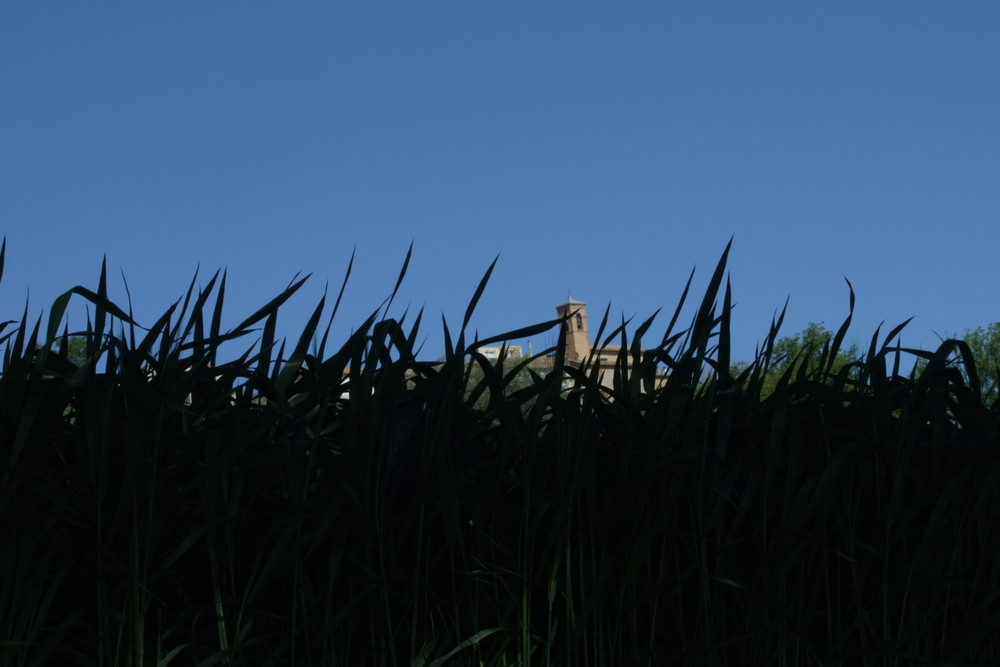 Nascosta dal grano