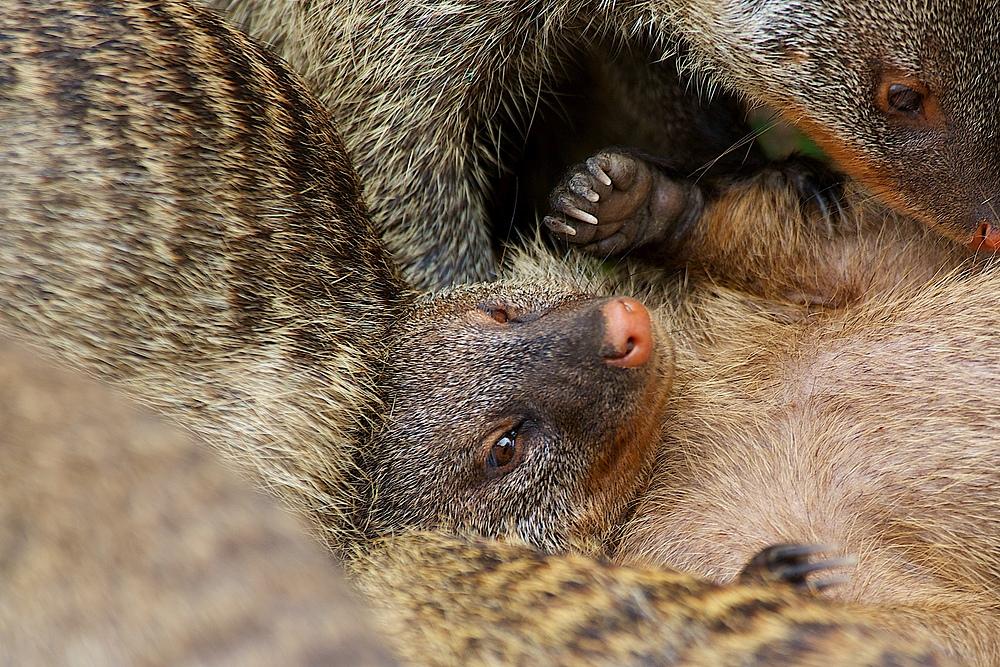 Nasenbären Kinderstube