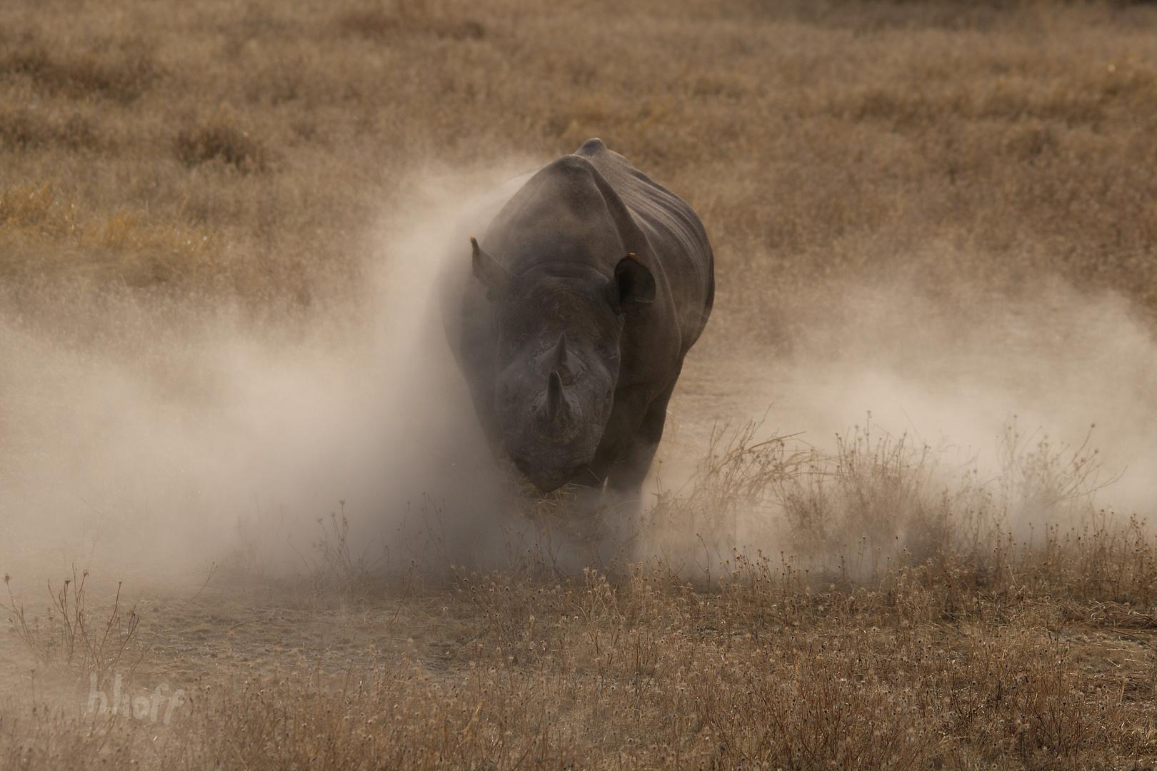 Nashorn-Attacke!
