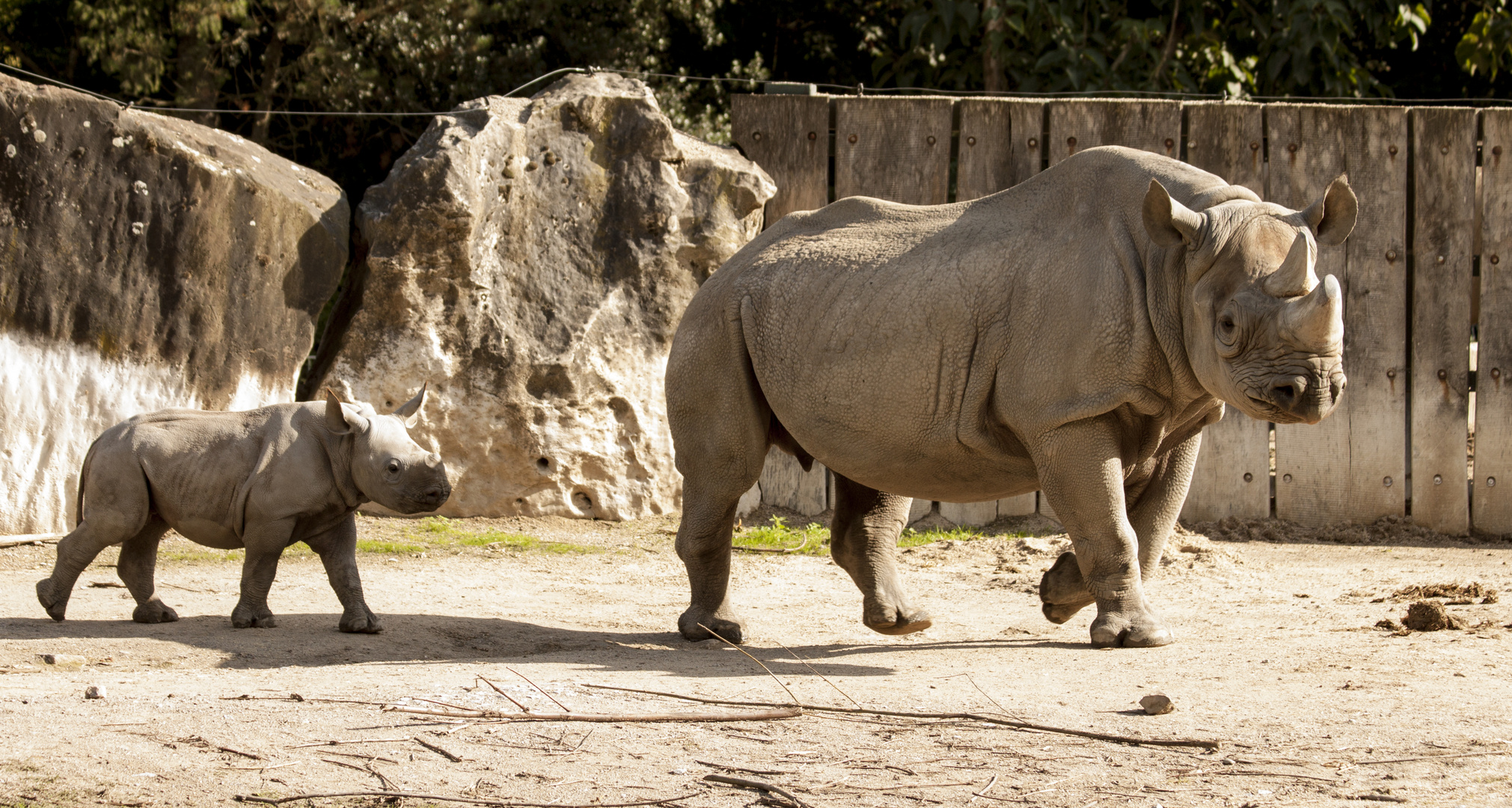 Nashorn Ausflug im Zoo