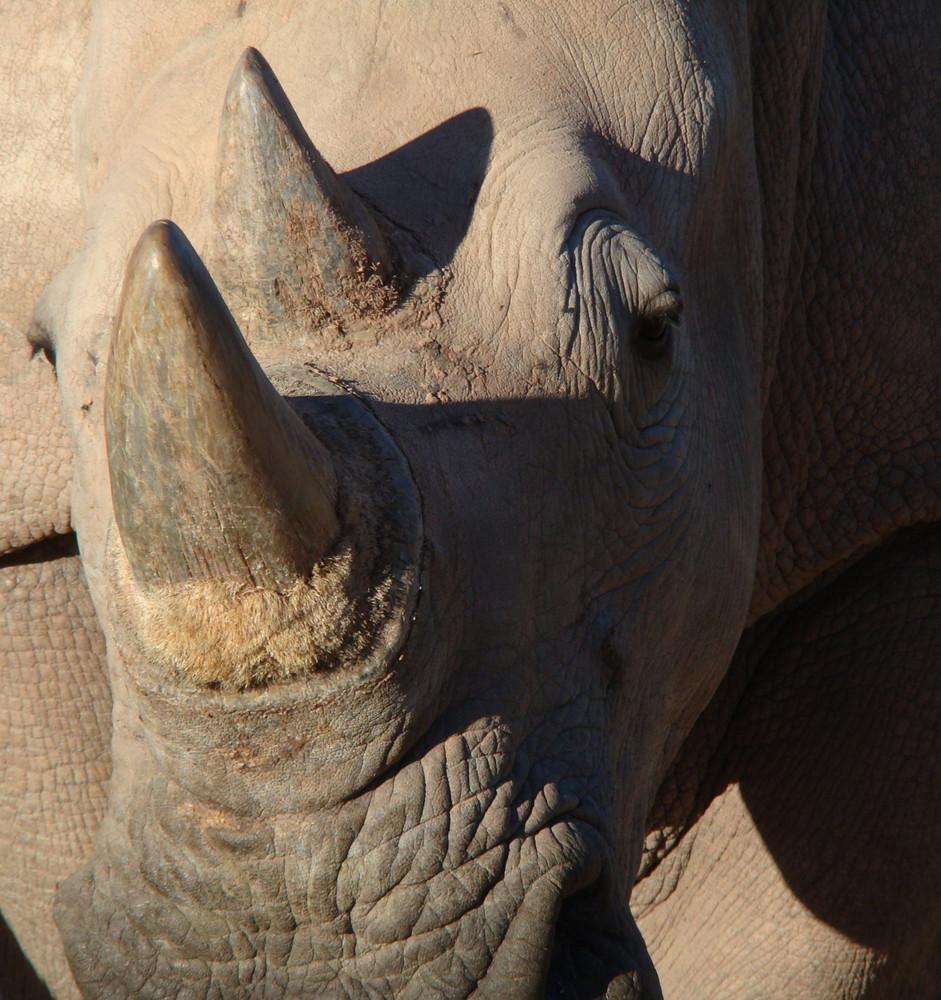 Nashornglück Namibia
