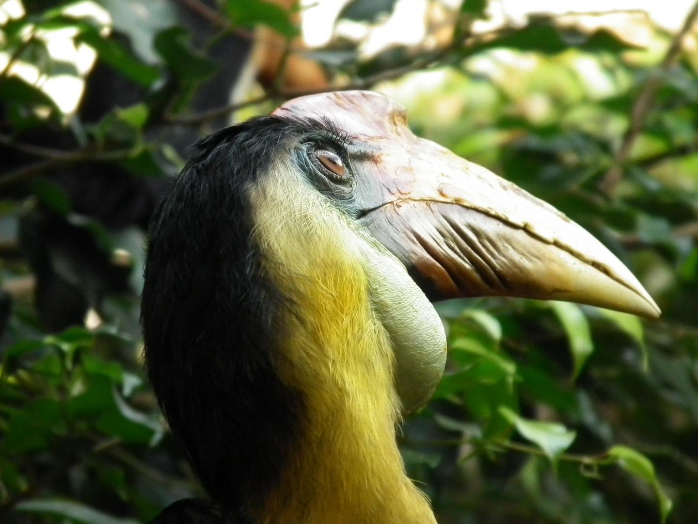 Nashornvogel 2