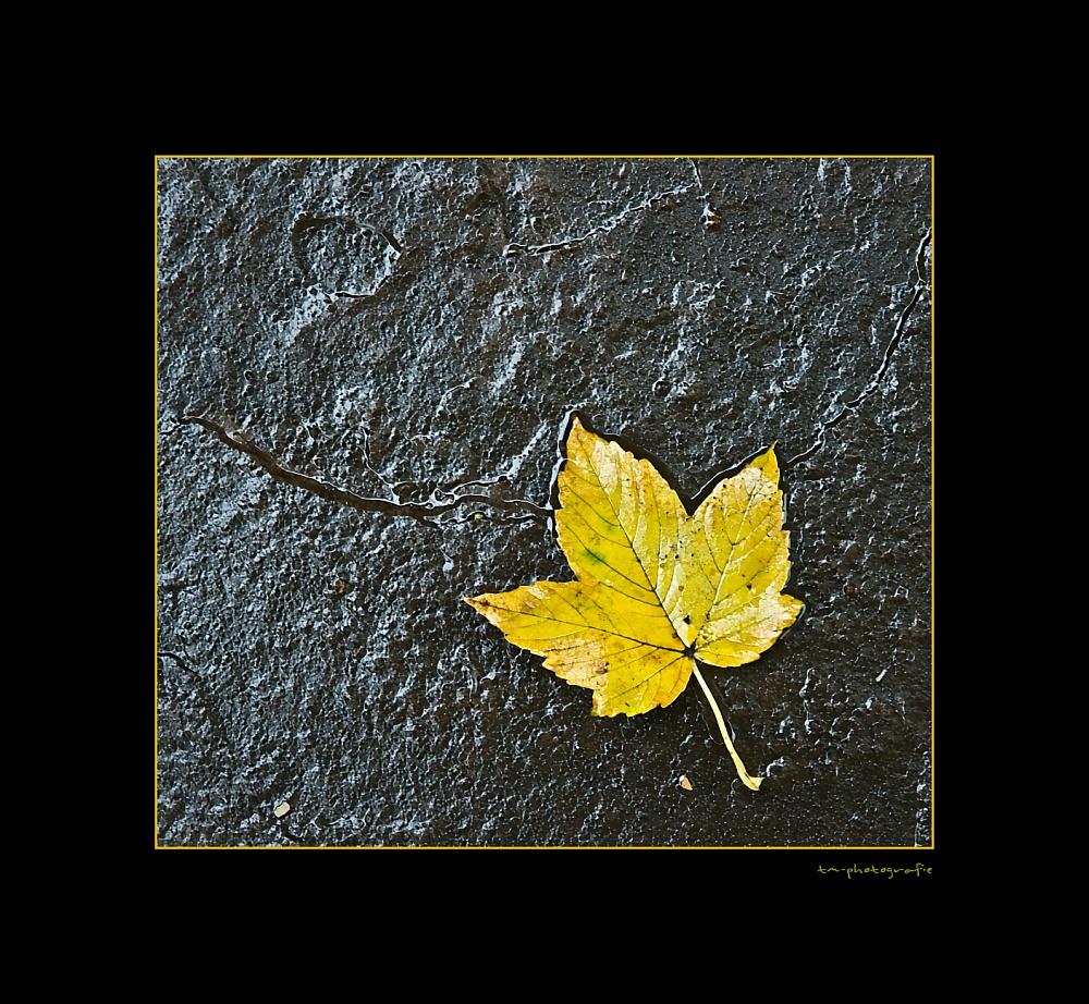 naß - kalt - Herbst