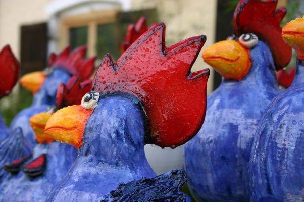 Nasse Hühner