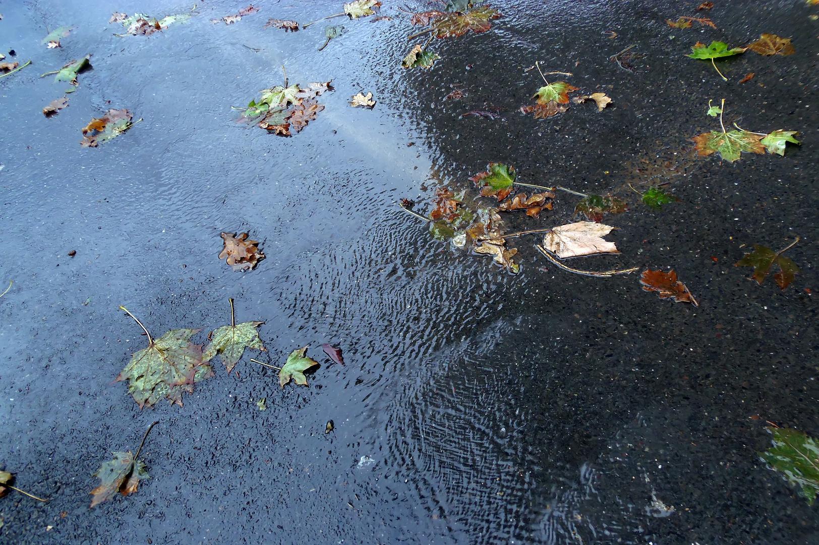 nasser Herbst -
