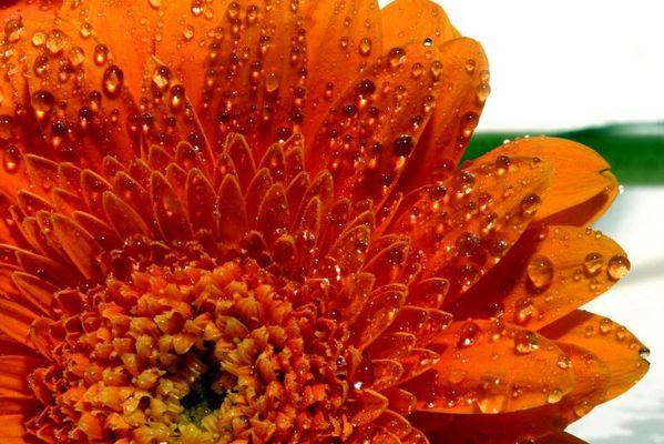 Nasses Orange