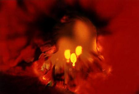 Nasturtium (oder auf dt. Kapuzinerkresse)