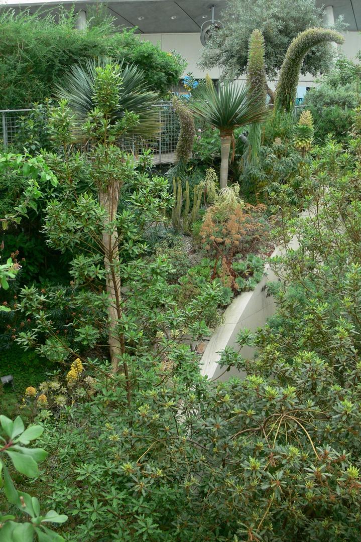 National Botanic Garden of Wales XII