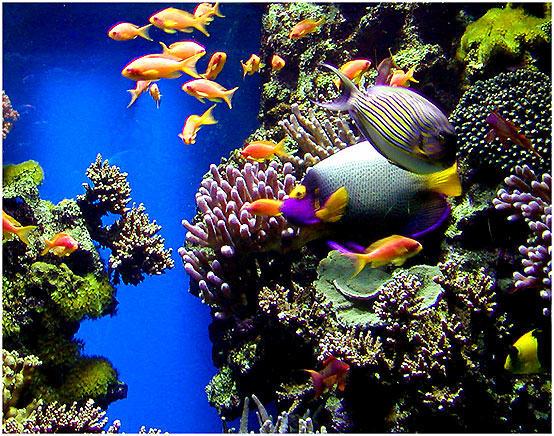 Nationales Aquarium Monaco