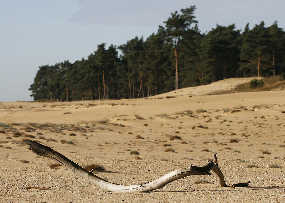 Nationalpark De Hoge Veluwe, NL (2)