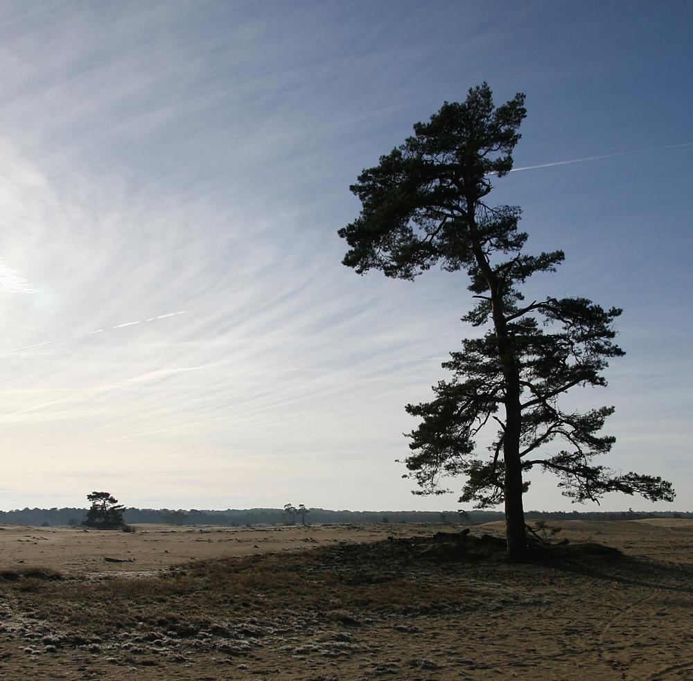 Nationalpark De Hoge Veluwe, NL