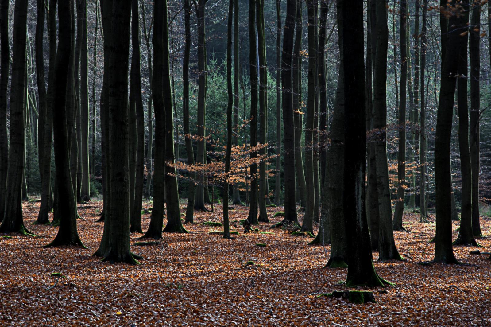 Nationalpark Eifel.03