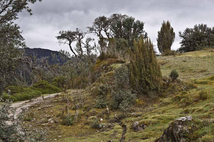 Nationalpark El Cajas 3