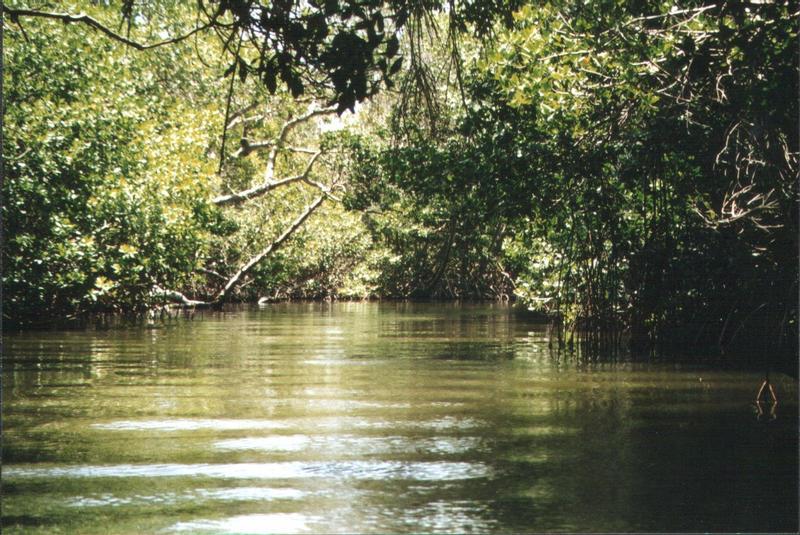 Nationalpark La Restinga Isla Margarita Venezuela 09.2001