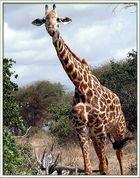 Nationalpark Tsavo-Ost
