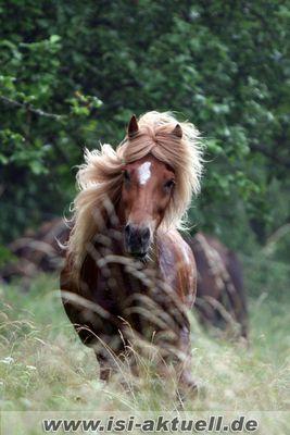 Natürlich blond .....