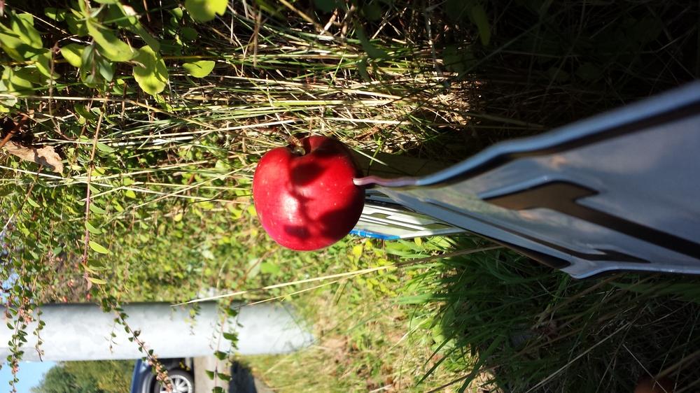 Natürliche Apfelspaltung