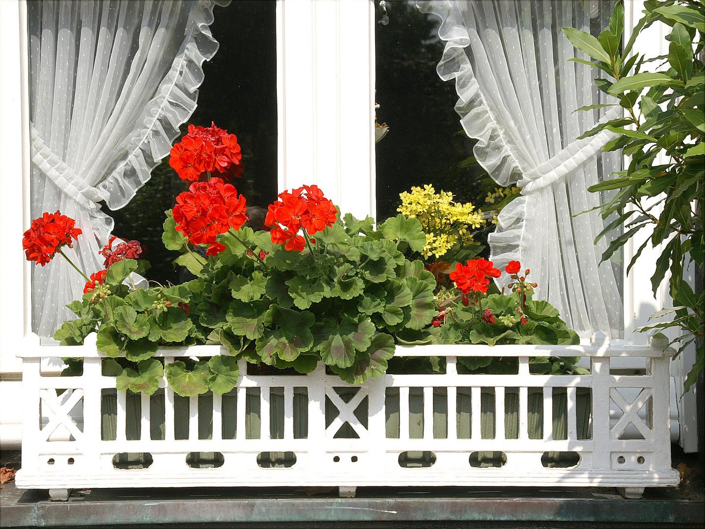 Natürliche Fensterdeko