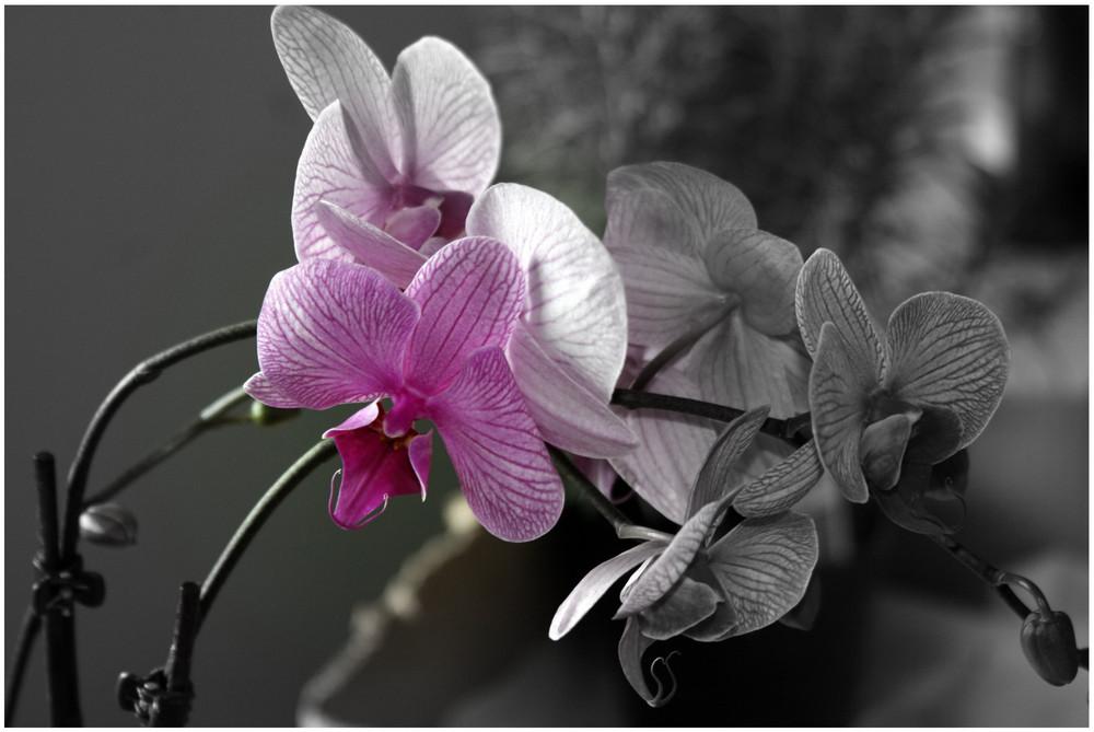 Natürliche Schönheit