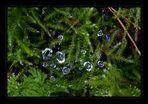 natürliche Sommer - Weihnachts - Grüsse