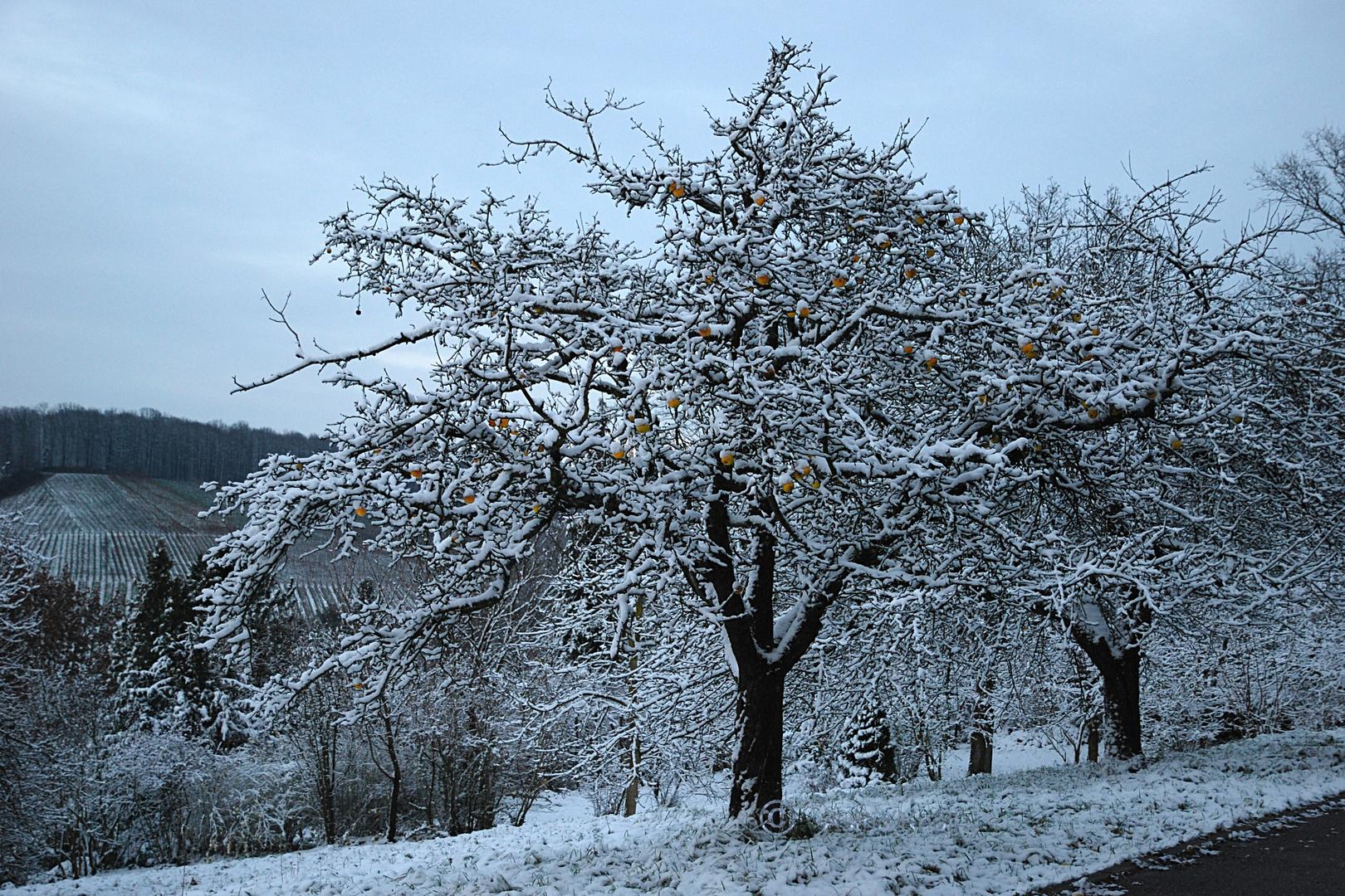 natürliche Weihnachtsbaumkugeln