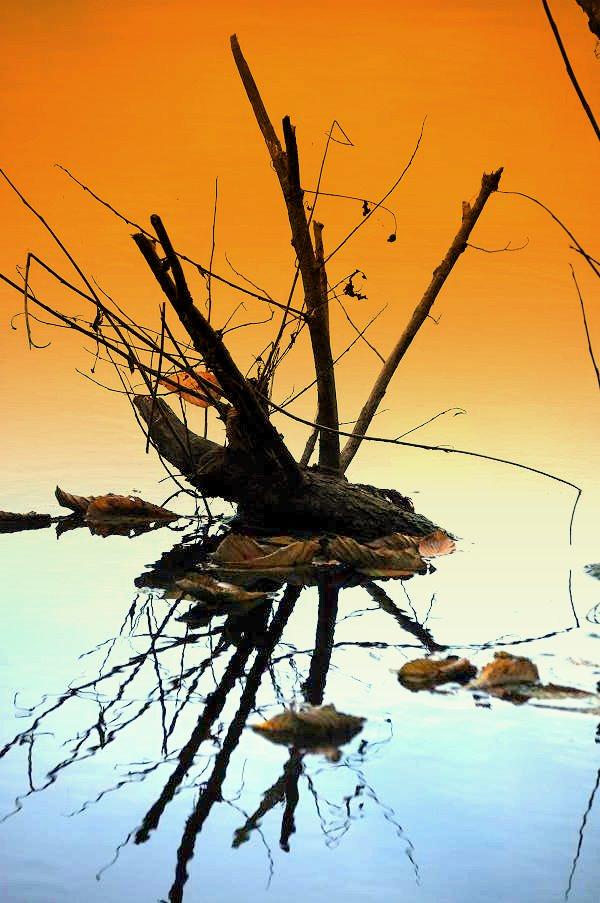 natürliches Ikebana gespiegelt im See