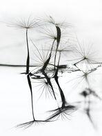 Natur abstrakt
